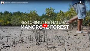 MangroveVideo 2