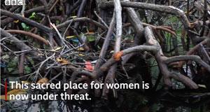 Sacred-mangroves