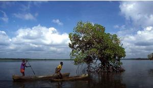Kenyas-Mangrove.12-PM