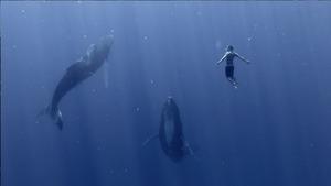 One-Sea