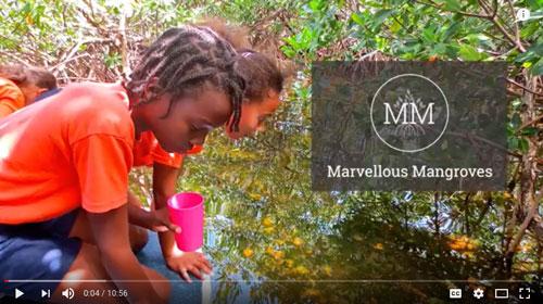 Marvellous_Mangroves